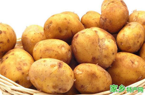 恩平特产-恩平马铃薯相关图片
