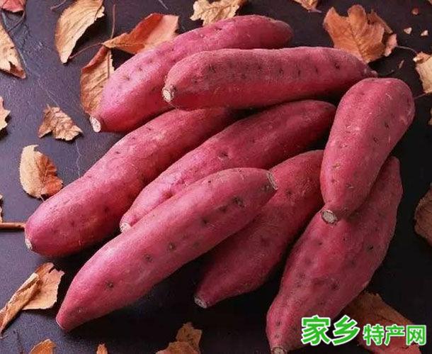 潮安特产-后陇红番薯相关图片