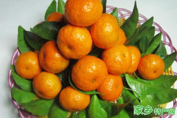 梧州市特产-梧州砂糖桔相关图片